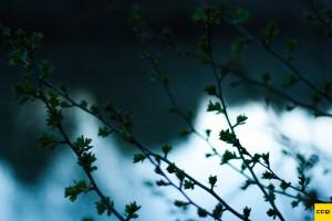 Bomen-in-knop-carpcityquest