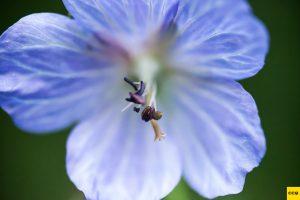 close-up-bloem-carpcityquest