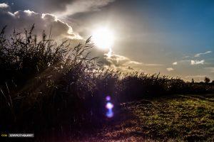 landschap-8-friesland